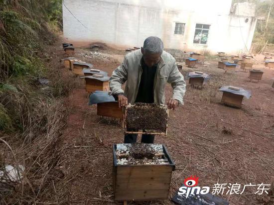 邓汉芬父亲养蜂照。