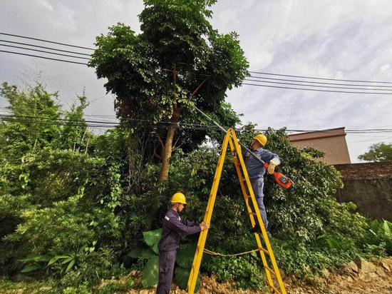 6月13日,南方电网广东阳江供电局运维人员对树障进行清理。(陈俊东 摄)