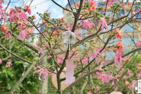 秋冬在百万葵园绽放的粉红少女心