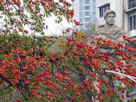"""广州""""英雄花""""红染遍地 犹如缅怀壮士风骨"""