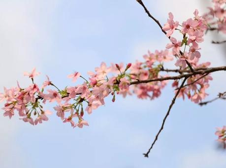 满园春色关不住,2月广州赏花攻略