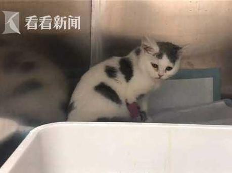 """女子领养猫""""绝育费捐赠费""""花1400元 小猫4天就死了"""