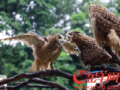 """广东省""""爱鸟周""""在广州长隆野生动物世界启动"""