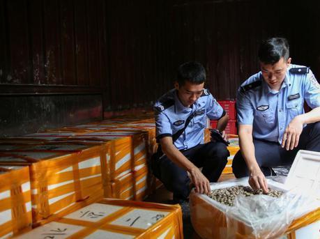桂粤海关特大海产品走私案值2亿元