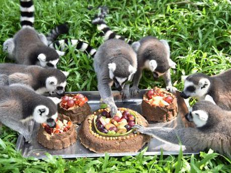 """中秋节深圳野生动物园的动物们也吃在排排坐 吃""""月饼"""""""