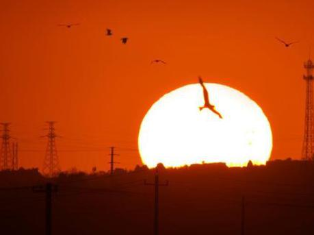天气转凉 成群鸻鹬类候鸟迁回场面壮观