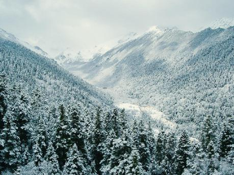 看苍木映雪,游龙戏雪