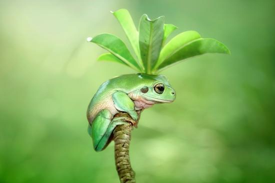 摄影师Kurit Afsheen来自印度尼西亚雅加达,擅长拍摄青蛙,蜗牛等大自然的小生灵。在他的镜头下,这些小体积的动物仿佛置身于童话的王国,他们相互为伴,画面十分的有爱。这组动物摄影十分精彩,不少都捕捉到了动物王国的精彩瞬间,希望能带给你灵感。