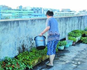 广州:小区物业纠纷频发 私家车被划楼顶变菜地