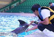 鲸豚类救护队在长隆成立
