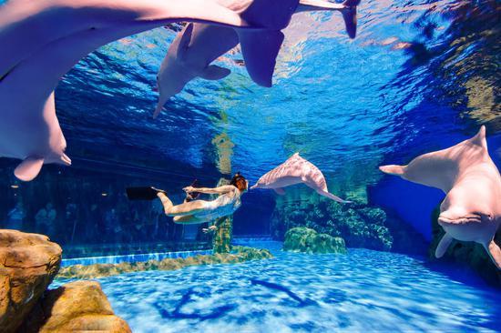 王国长隆攻略白海的中华珠海豚送上特别新春祝魔兽世界附魔v攻略海洋图片