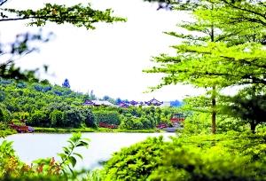 有望成为国家级湿地公园的花都湖。(资料图) 广州日报全媒体记者高鹤涛 摄