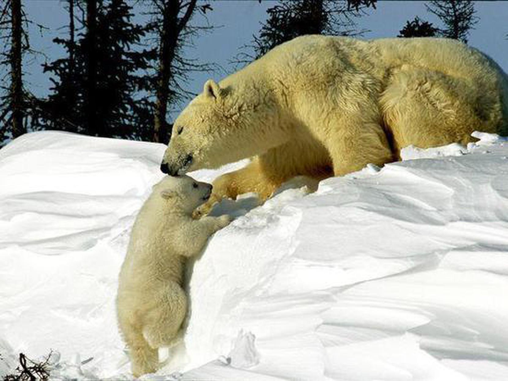 动物摄影:动物宝宝和母亲