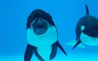 虎鲸繁育基地在珠海长隆启用