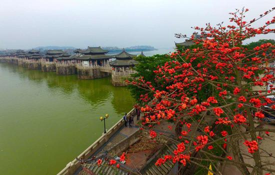 花团锦簇广济桥 摄影by 蓝远峰