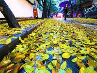 未来两日广东雨雾仍持续 中北部有暴雨雷电和回南天