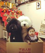 日本萌娃与狗走红网络