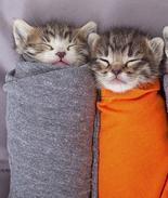 动物可爱睡姿萌化人心