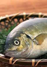 盘点世界顶级食用鱼
