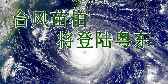 2017首个影响台风苗柏登陆深圳大鹏半岛