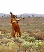 爆笑!动物界的奇葩喜剧演员