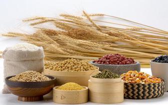 长期食用同种杂粮致免疫力降低