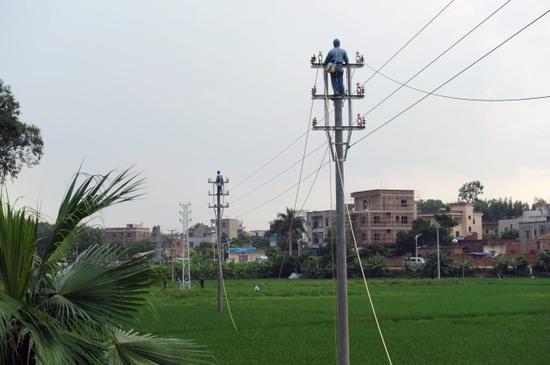 工作人员在10千伏王村港线上同时作业