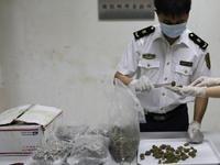 广州口岸从进境邮包中截获5袋印度大麻 重达2.45公斤
