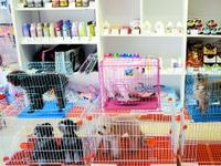 国庆寄养宠物火爆:中大型宠物每日收费60至80元不等