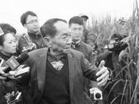 超级稻创纪录亩产2300斤 袁隆平稻花香里说丰年