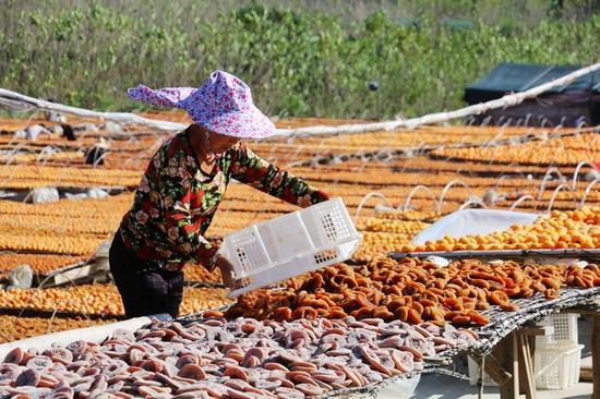 村民说,生柿子削掉的皮还能够用来喂鱼,绿色又环保。