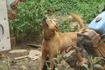 村民被狗咬从病发到离世仅两天