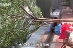 小区施工有隐患老人被树枝砸到