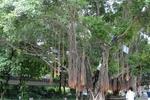 广州提出建立树木