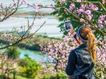 重庆最美的桃花观赏地