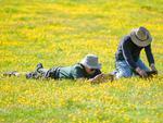 漫花开遍山野的草原