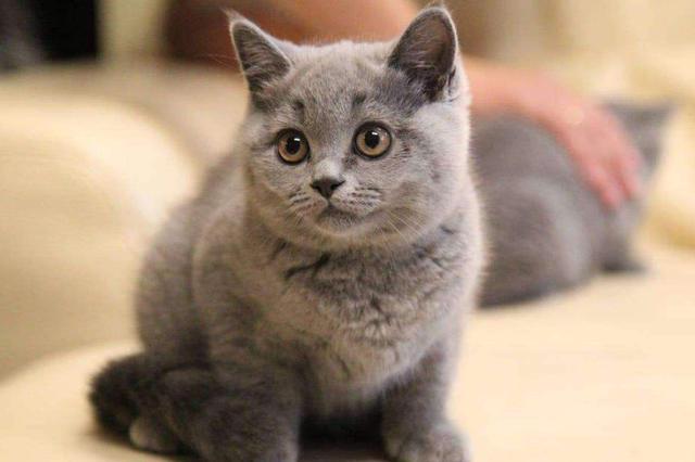 广州女子欲请消防救宠物猫 放火烧自家房子获刑1年