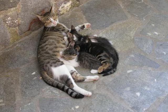 香港一男子喂流浪猫时突遭10人围殴 手机及眼镜被抢