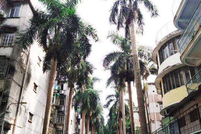 小区要砍500多棵大王椰 业主不舍急呼刀下留树