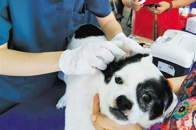 深圳:10月起,犬只未注射芯片视同无证养犬