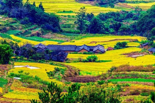 河源市埔前镇双头村成立广东首个村级电商扶贫产业园