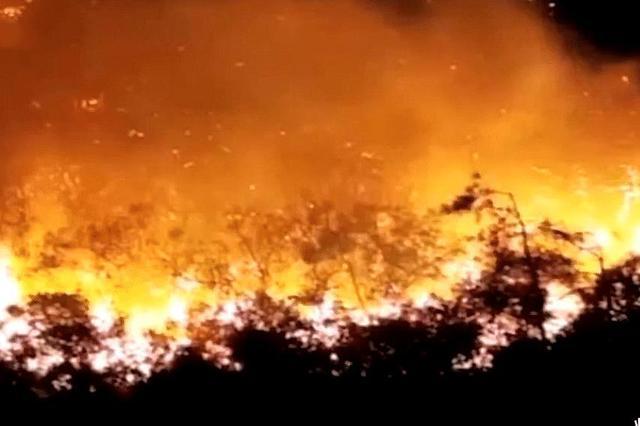 """汕头市南澳""""10·23""""森林火灾 明火基本被扑灭"""