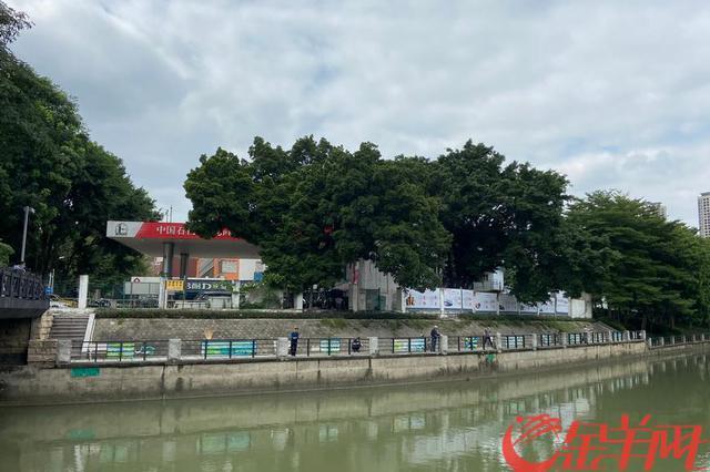 民间河长架起护河桥 从天河车陂涌一窥广州开门治水
