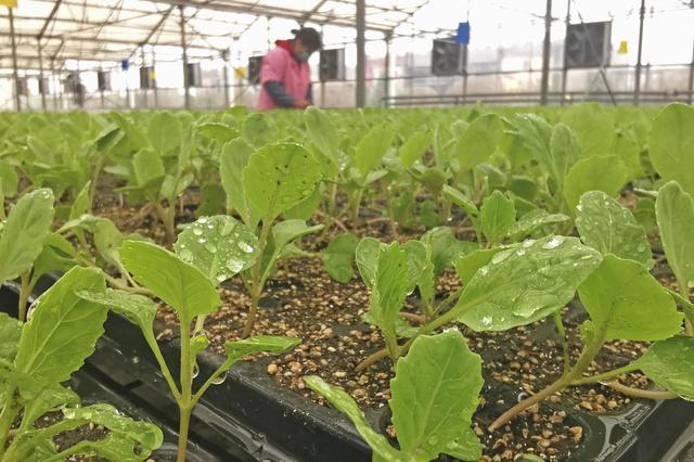 广州白云区1800亩都市农业观光园预计5月开园