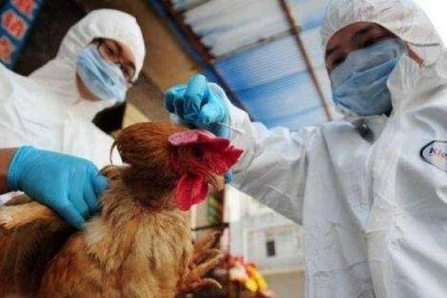 注意!东莞市报告1例H5N6病例