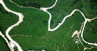 福建平和壮观的茶山梯田