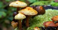 潮湿闷热多雨 盛产野蘑菇
