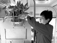 公交车女司机自带鲜花扮车厢 称:想让乘客感受春天