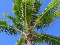 天河一小区门外6棵大王椰树遭砍伐 街道办承诺复种