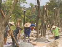 昨日,植物园的工作人员加紧修复景观(首席记者 郑琳东 摄)